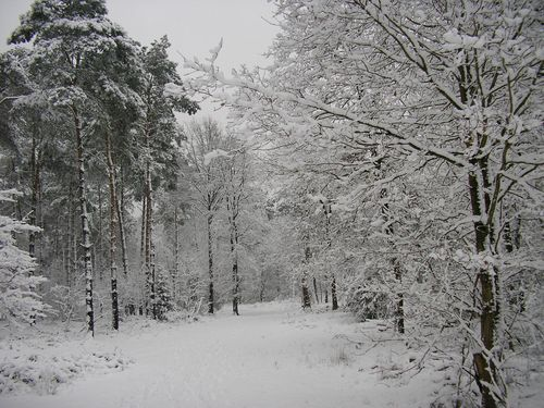 Beegerderheide in de winter