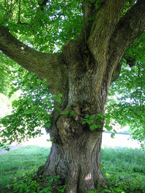 Lindeboom landgoed Zegenwerp