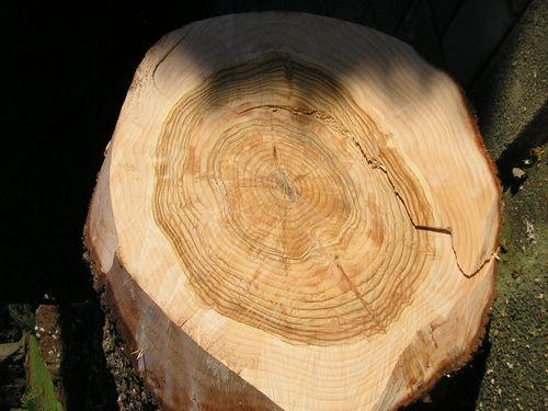 Doorsnee van een boom