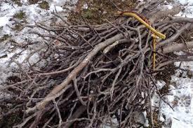 Takkenbos van sprokkelhout